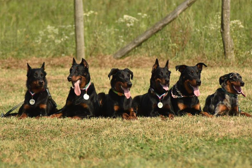 Beaucerons 2