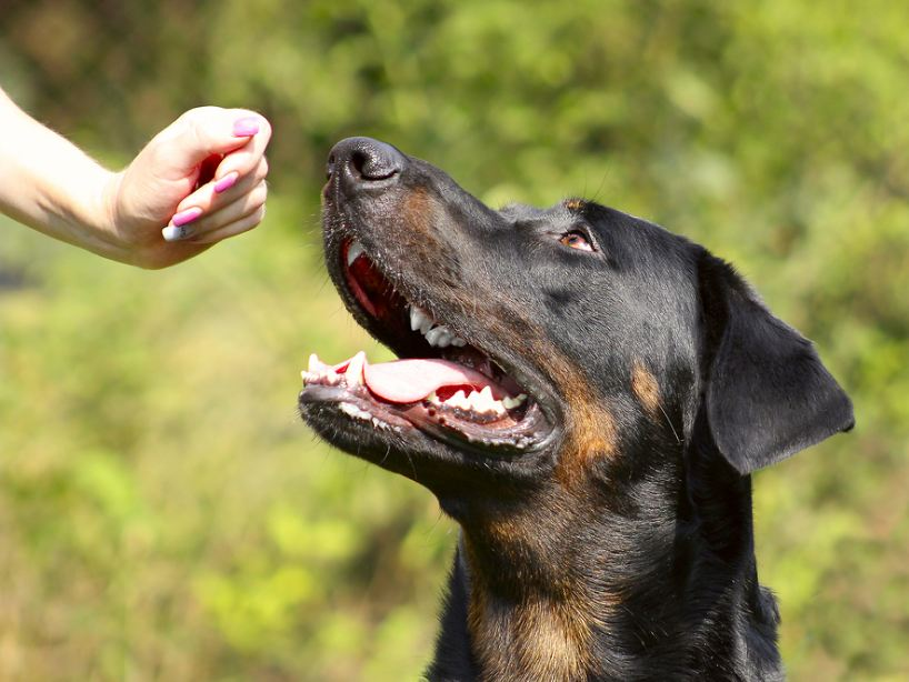 Beaucerons 7