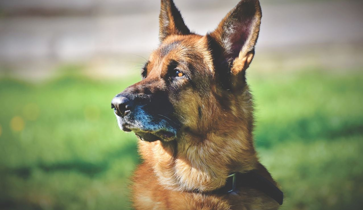 Best Supplements For Ageing Dogs