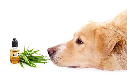 cbd for dogs 5